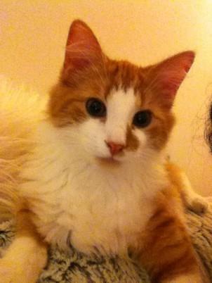 Kraken-Grelot, chaton adopté avec l'Association Solana
