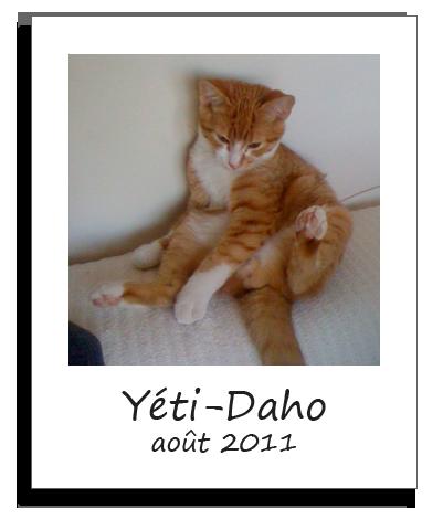 Yeti-Daho, chaton adopté avec Solana en août 2011